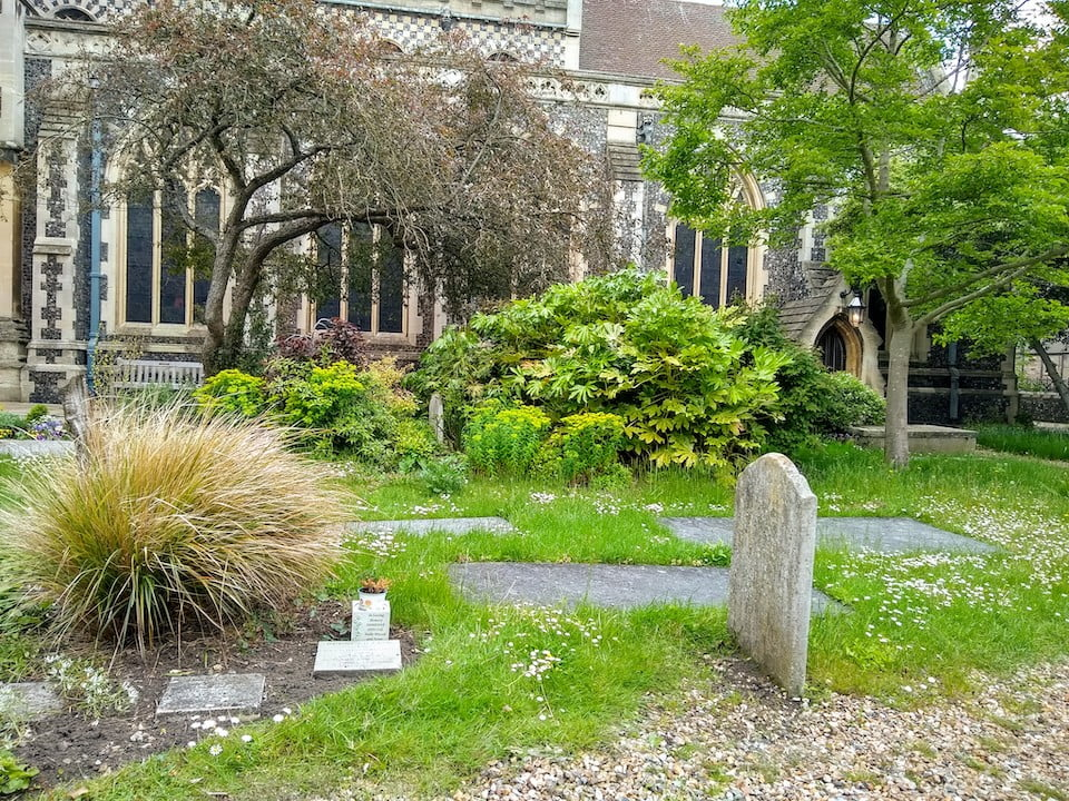 St Mary-le-Tower churchyard in the sun – graves and big plants.